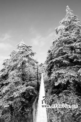 夜晚森林雪景图