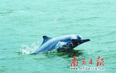 壁纸 动物 海洋动物 桌面 400_253