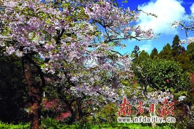 南方春天凉茶图片