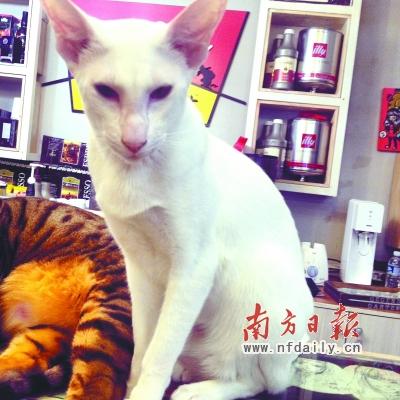 那些长相奇怪的猫咪们