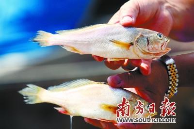 濒临灭绝水生生物资源保护