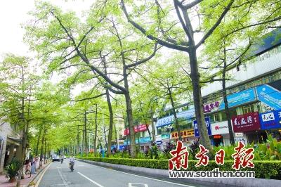 陵园西路是广州市木棉树最多,最整齐,最挺拔的街道.
