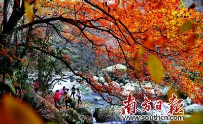 ps枫叶风景图