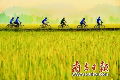 自行车田野嘉年华