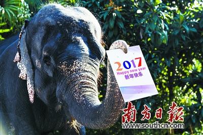 右上图:深圳野生动物园里的动物也纷纷用自己