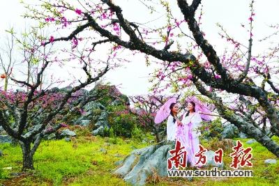 仿真桃花树造型