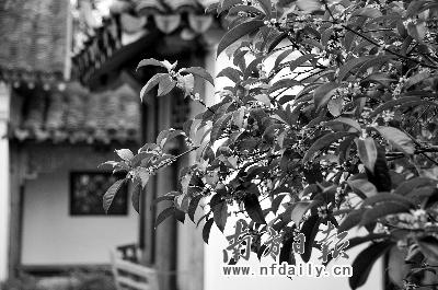 在这里可以看到大自然中顽强的生命力,一棵棵大树从寺庙的墙壁间,缝隙
